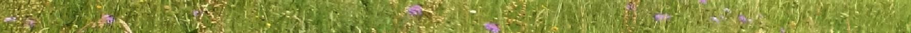 prairie naturelle en Margeride